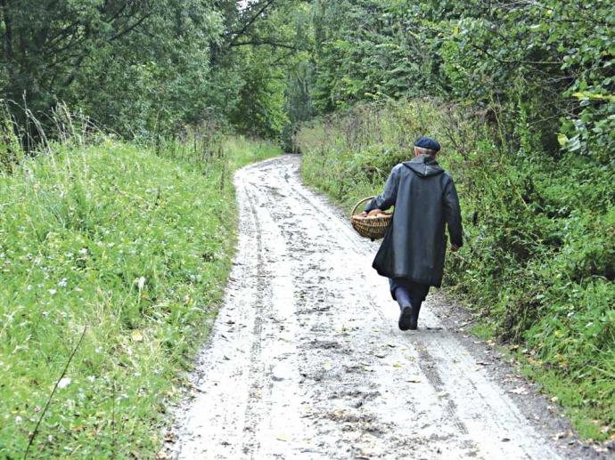 Гродненские таможенники проводят проверку пофакту нарушения грибником границы сЛитвой