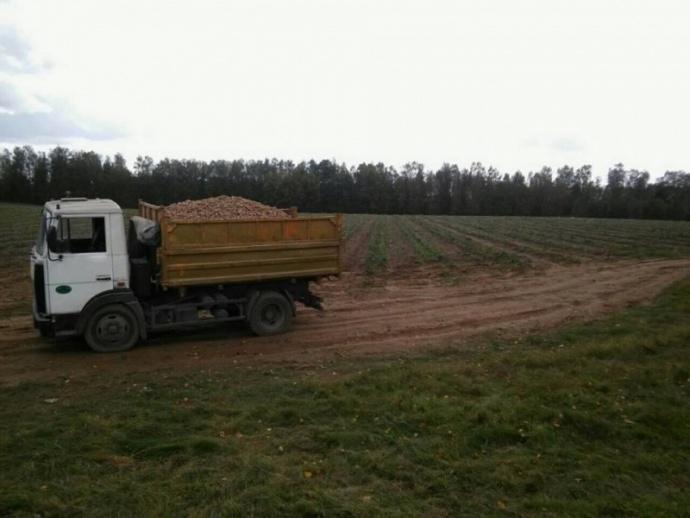 Фургон задавил школьницу, убиравшую картофель наполе под Молодечно