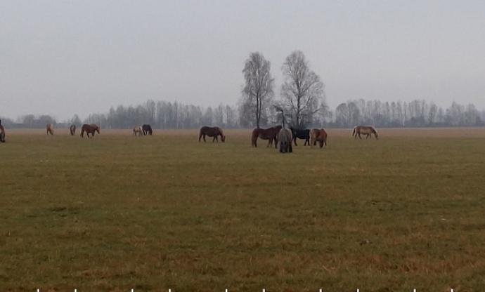Белорусские таможенники помогли вернуть табун лошадей-нарушителей вПольшу