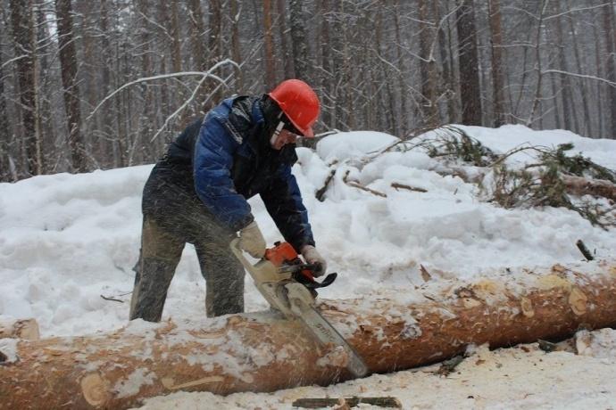 Многодетный отец умер при заготовке древесины вКобринском районе