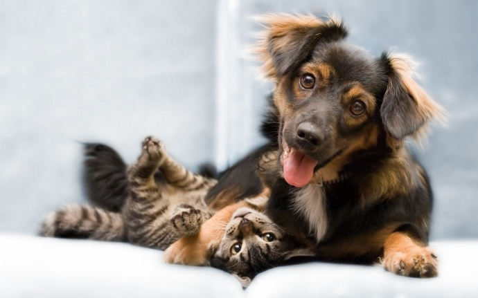 Кошки абсолютно не глупее собак