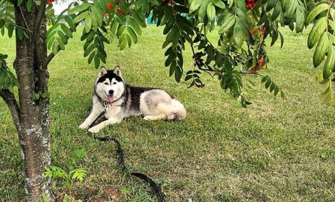 Найдена собачка, которую украли около лицея БГУ вМинске