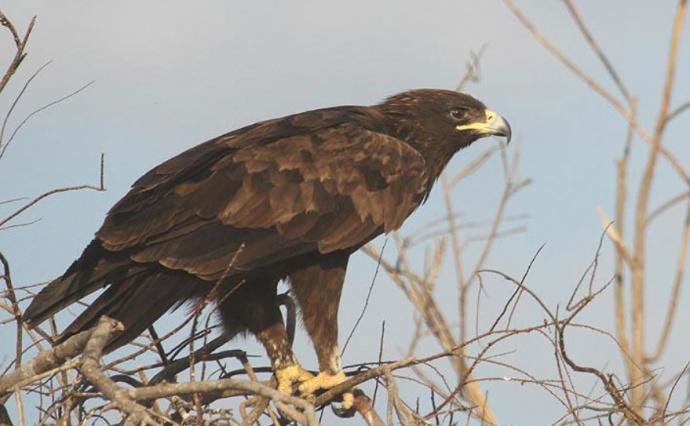 словам хищные птицы белоруссии фото мнению следствия, мужчина