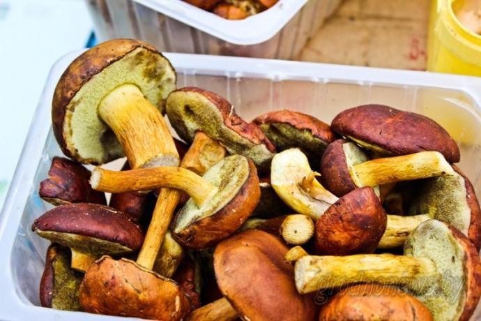 «Хорошо растут опята и зеленки». Грибной сезон в Гродно продолжается и в ноябре